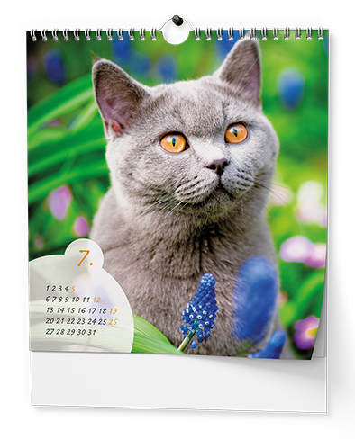 Nástěnný kalendář - IDEÁL - Kočky