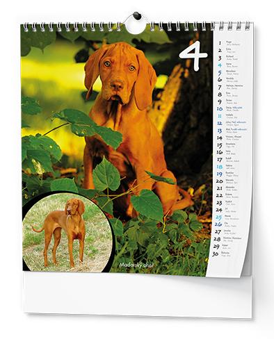 Nástěnný kalendář - IDEÁL - Štěňata