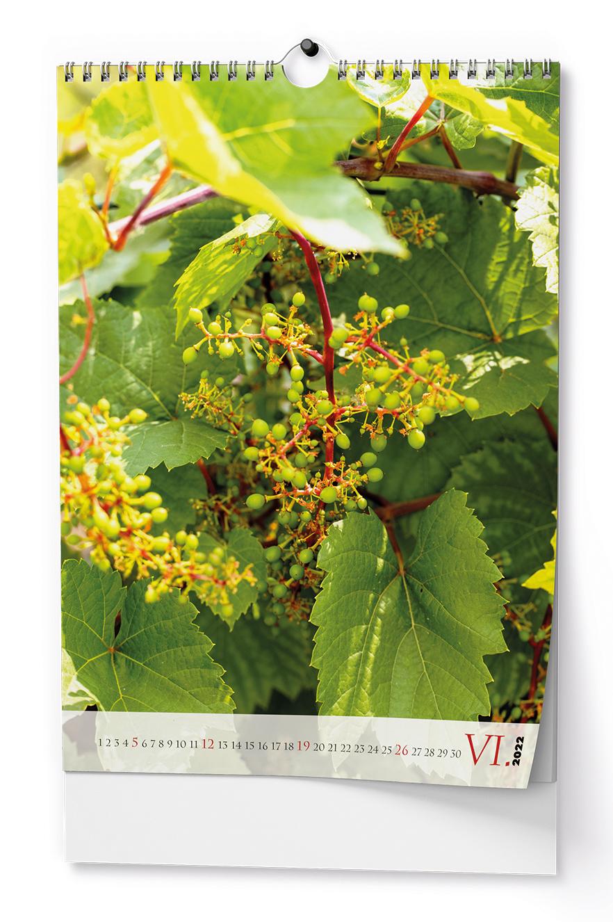Nástěnný kalendář A3 - Víno